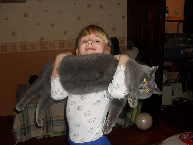 взрослые коты британцы фото